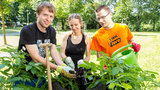 Three students plant tomatoes in the Permaculture Garden on campus