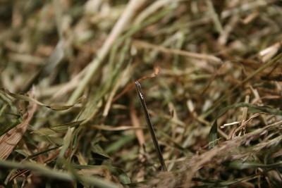 Foto: Nadel im Huehaufen mit Lupenfunktion